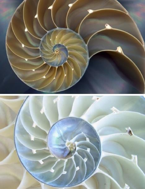 fractal-nautilus-shell