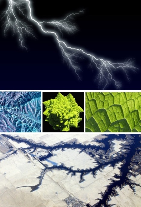 fractals-in-nature