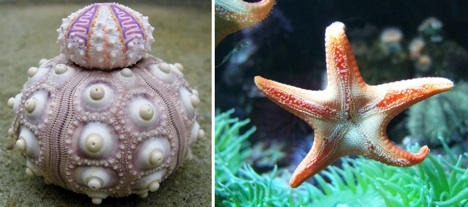 sea-star-and-sea-urchin-fractal