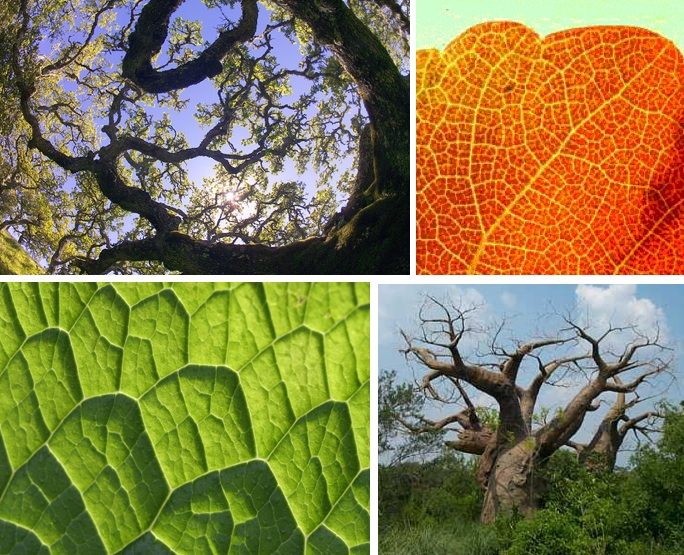 tree-leaf-fractals