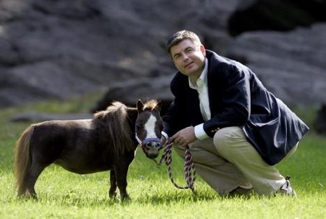 thumbelina-horse