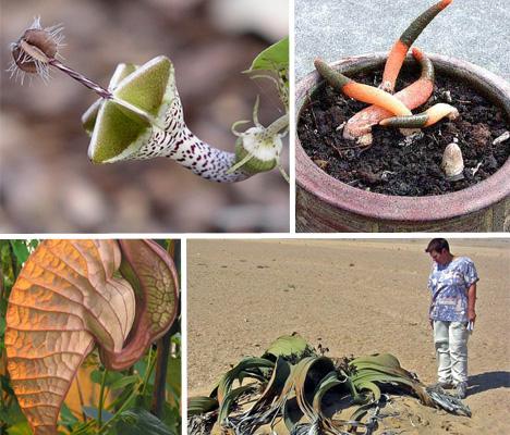 rare-and-amazing-plants-main