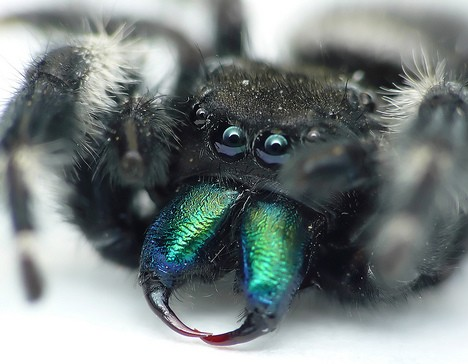 8 Smiling Spiders That Make You Feel Warm and Fuzzy