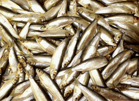weird-diseases-fish-odor-syndrome
