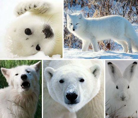 arctic-animals-main