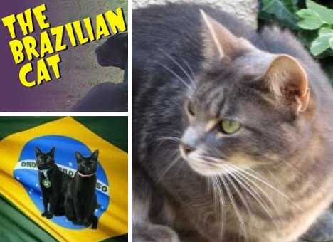 The Brazilian Shorthair Cat: Ship To Shore To Home