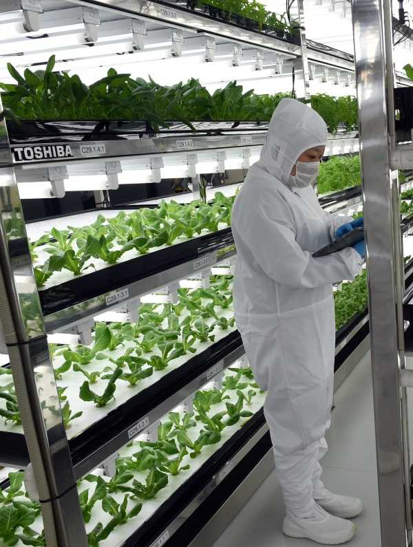 Electronics Plant Ditches Disks, Pitches Lettuce