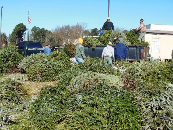 I Want You… To Recycle Your Old Christmas Tree!