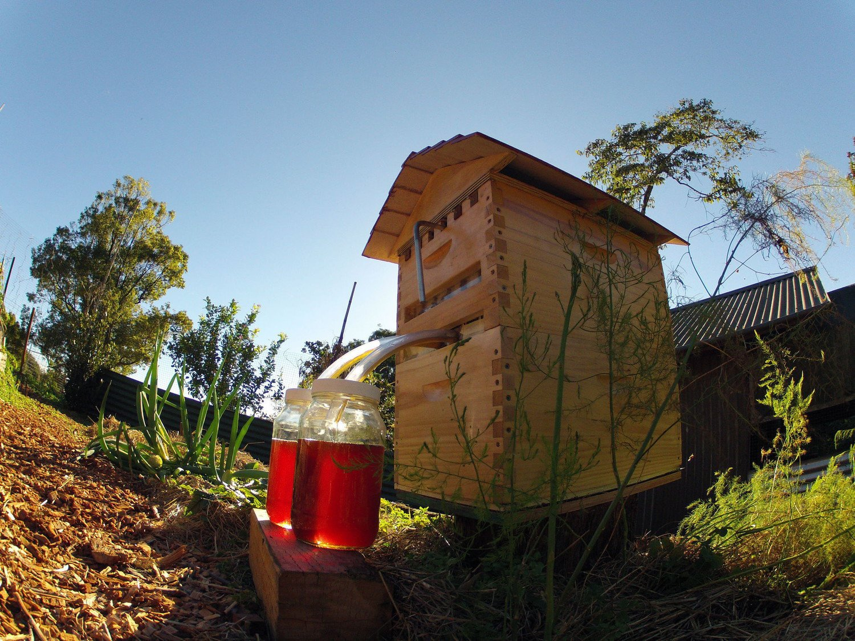 flow hive 4