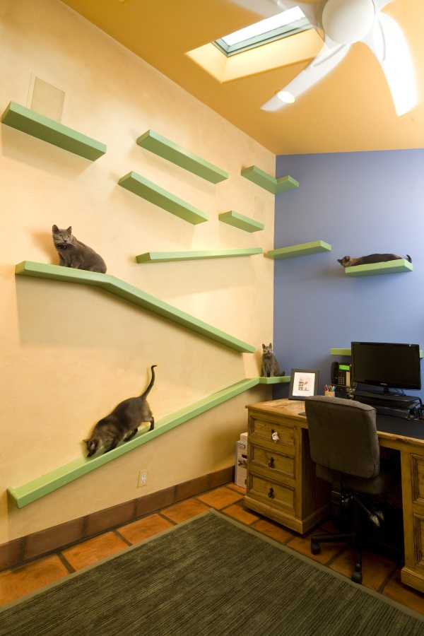California Cat Lover's House68x