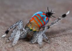 Meet Sparklemuffin and Skeletorus, Two New Spider Species