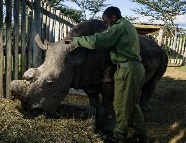 Last White Rhino 4