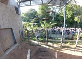 Elephant GoPro Provides A Pachyderm's POV