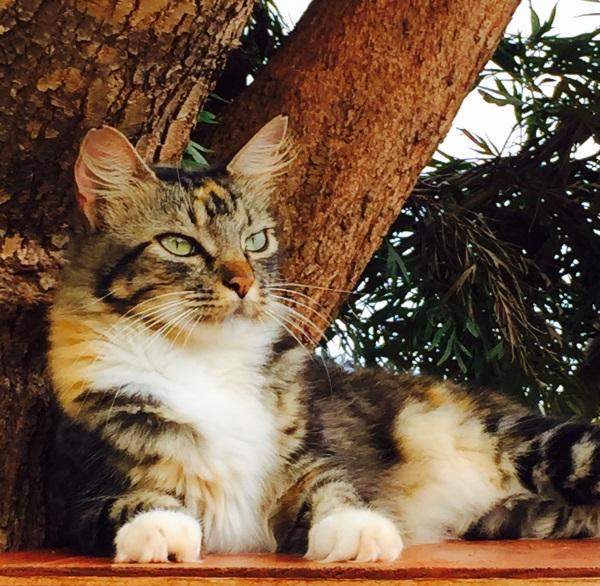 Lanai-Cat-Sanctuary-5