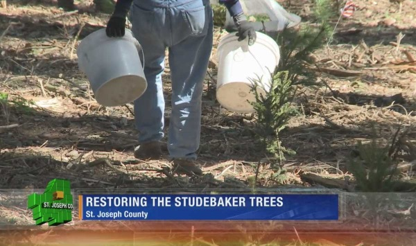 studebaker-tree-sign-8a
