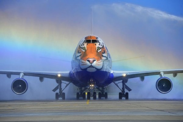 Tiger Face Jet Supports Endangered Big Cats