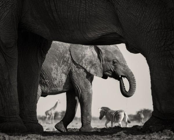 wildlife-3