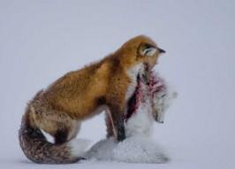 2015 Wildlife Photographer of the Year Winners
