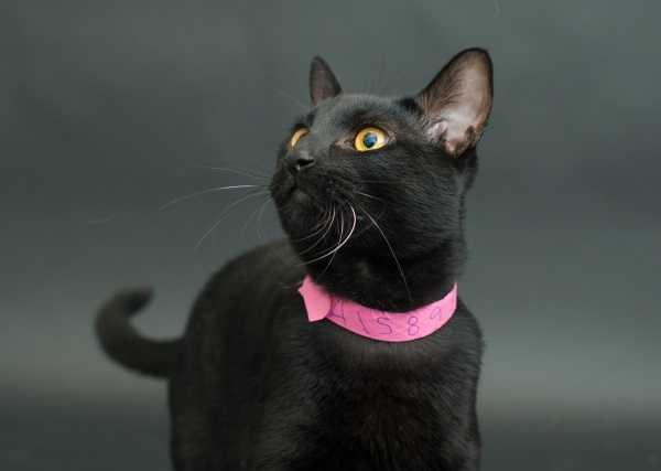 black-cat-project-2b