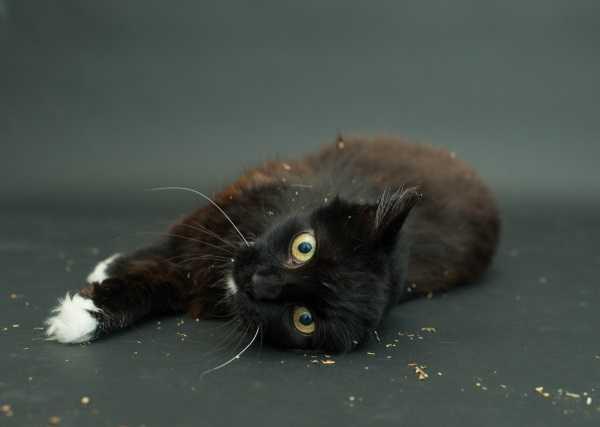 black-cat-project-3a