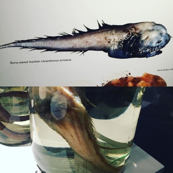 assfish_8