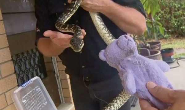 snake-teddy-bear-13