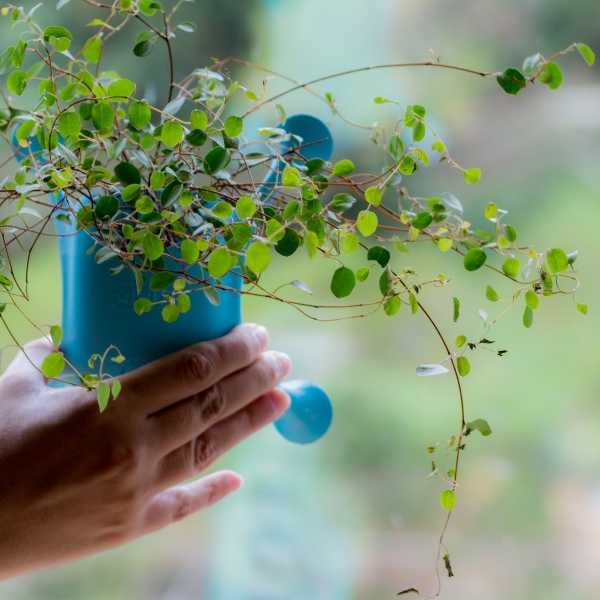 suction-cup-planters-10