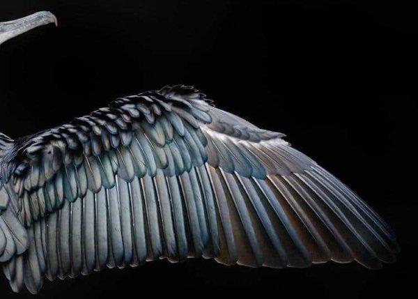 2017-wildlife-birds-7