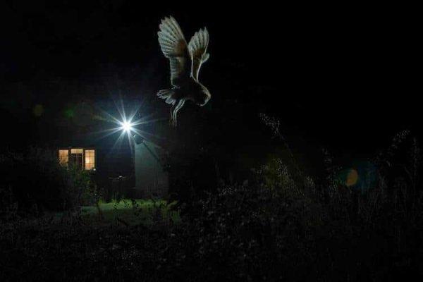 2017-wildlife-birds-8