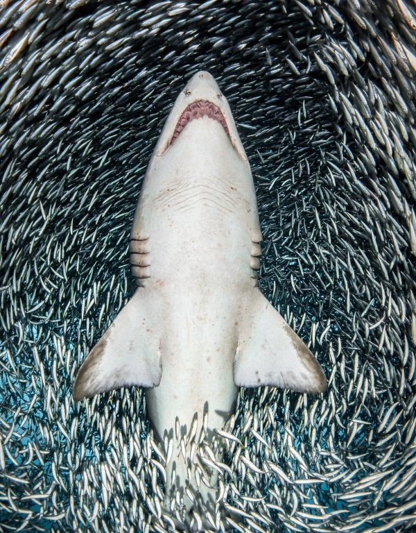 Sea It: 2018 Underwater Photographer Of The Year