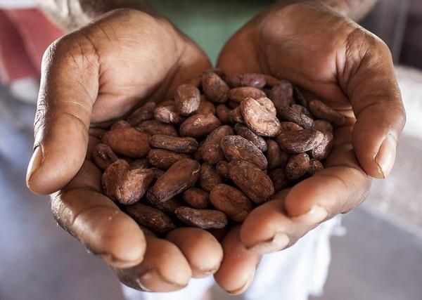 Eco Cocoa: Kit Kat Japan's Cacao Fruit Chocolate Bar