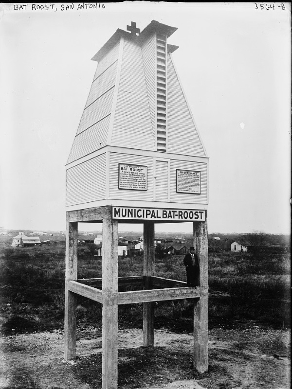 Bats Motel: Giant Bat Roosts Were Ahead Of Their Time